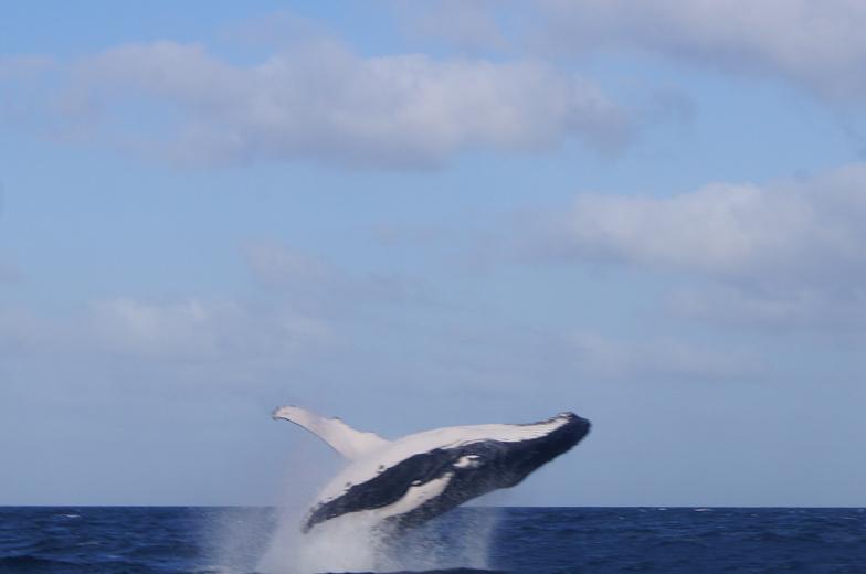 australien surfers paradise whale watching 3