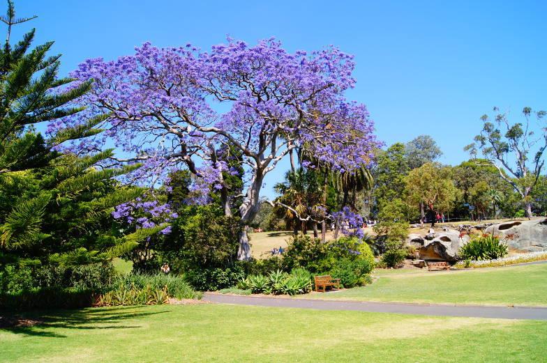 Sehenswuerdigkeiten Botanischer Garten Sydney Australien