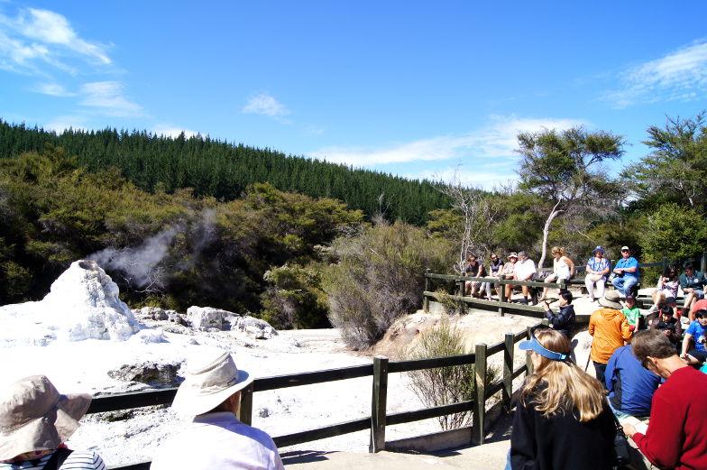 Ladyknox Geysir in Wai O Tapu Sehenswuerdigkeiten Rotorua Neuseeland