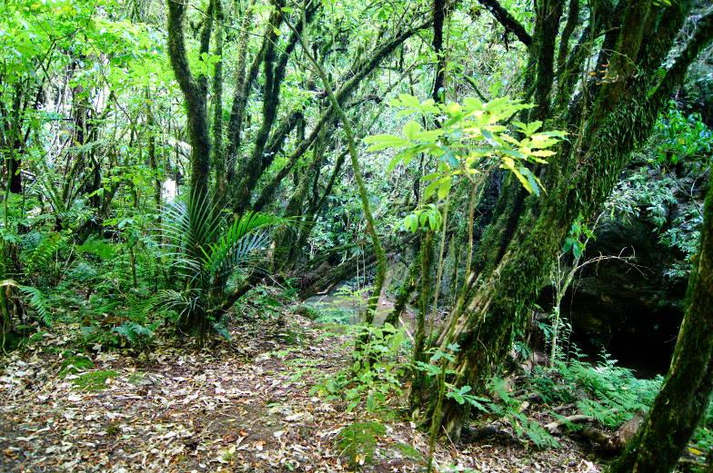 Der Rückweg von den Waitomo Glowworm Caves