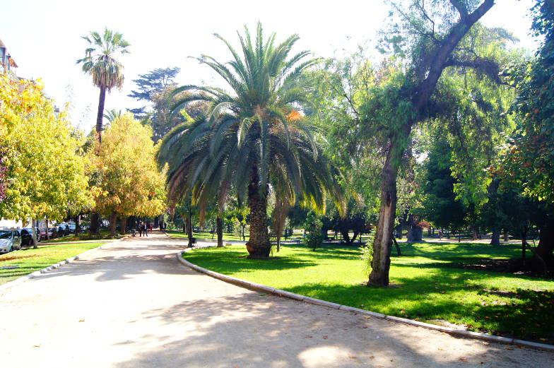 Schoene Palmen im Parque Forestal Santiago de Chile