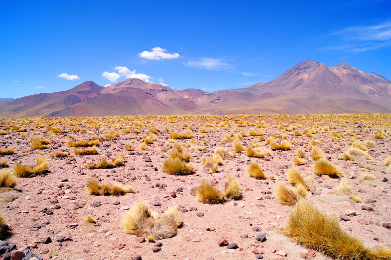 Highlight die beste Tour durch die Atacama Wueste