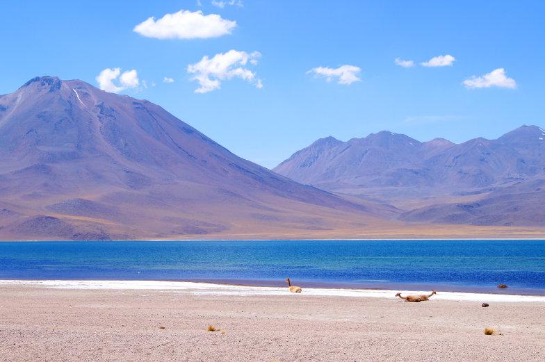 Insidertipp besuche die Miscanti Lagune Atacama Wueste Chile