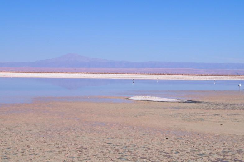 Flmaingo Nationalpark in der Atacama
