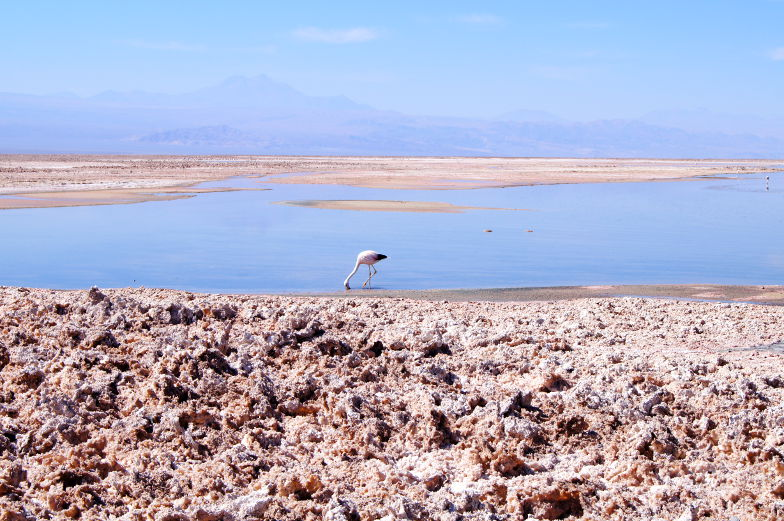 Tour durch die Atacama Wueste am Salzsee mit Flamingo