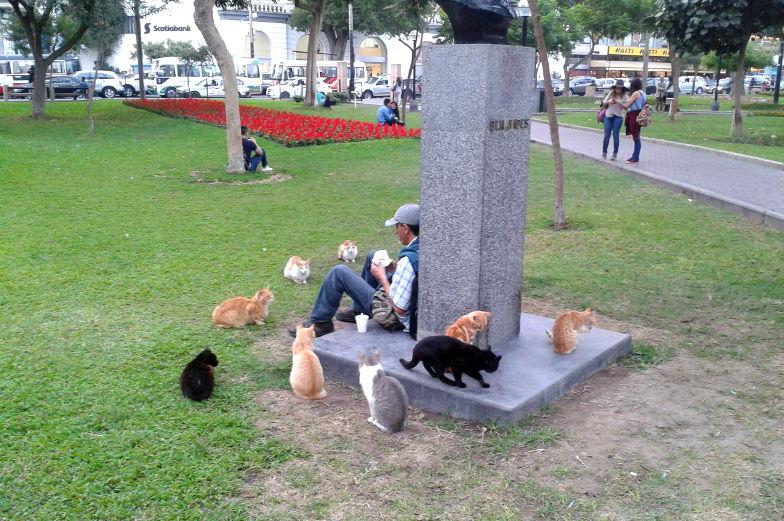 Tipp der Kennedypark in Miraflores Lima ist bekannt für seine Vielzahl an Katzen