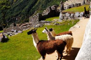 Der Machu Picchu Ausflug war eins unser schoensten Weltreise Erlebnisse
