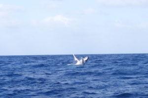 Australien surfers paradise whale watching auf Weltreise