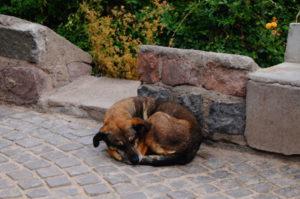 Es gibt nur noch wenige freilaufende Hunde in Santiago de Chile