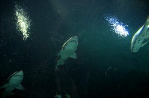 Sharkreef Mandalay Bay Hotel Las Vegas Sehenswuerdigkeiten