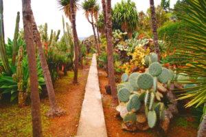 Funchal Tipps Jardim Botanico Kakteen