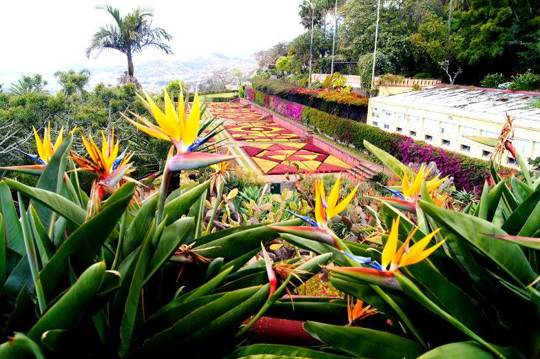 Blick auf Blumenbeet im botanischen Garten in Funchal