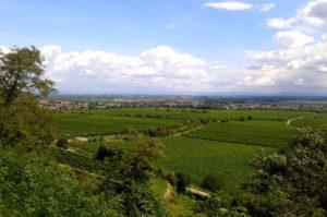 Reisetipp wandern in der Pfalz