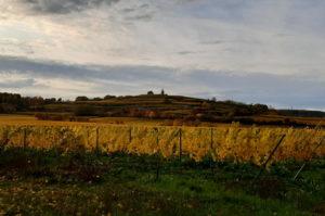 Reiseziel Weinregion Pfalz
