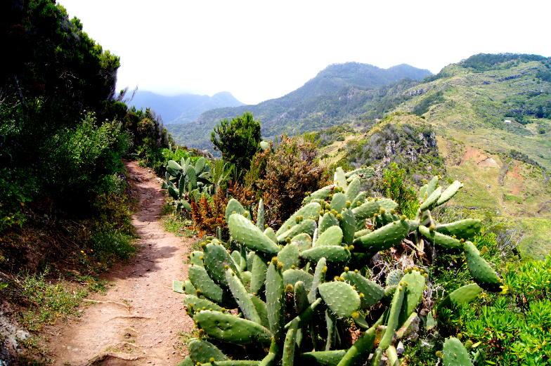 Spazierweg am Pico do Fachu mit Blick ueber Madeira