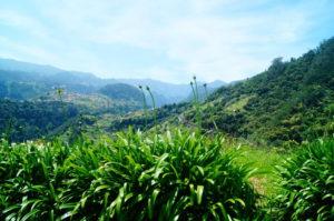 Tour durch die gruene Landschaft im Osten Madeiras